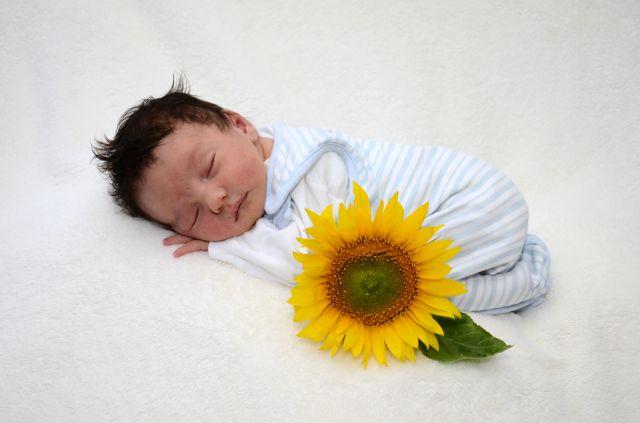Baby Sonnenblume